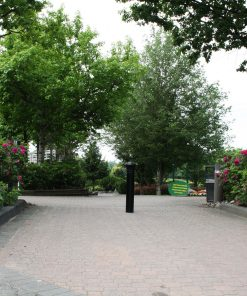 R-7573 decorative bollard in middle of driveway in front of large tree