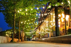 Urban trees with decorative lights at night