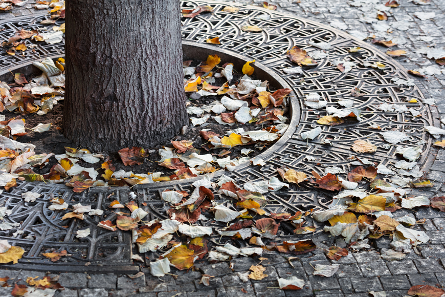 Iron tree grate protecting sidewalk tree