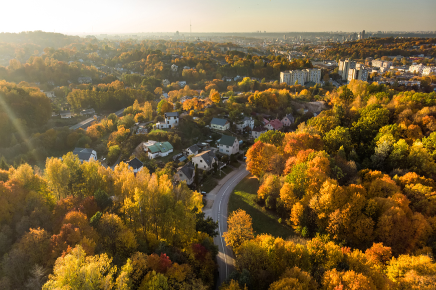 Colorful trees in urban neighborhood