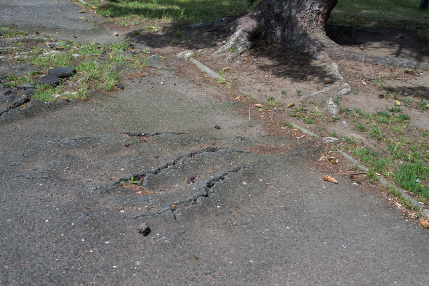 Asphalt ripples and cracks with roots heaving the surface from below