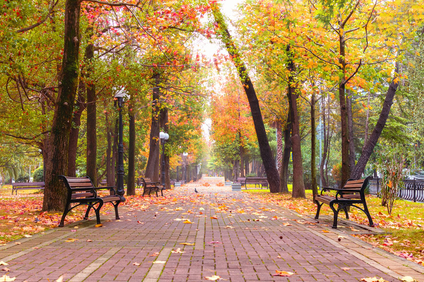 An autumn scene of a plaza corridor lined with canopy trees and classic wood slat, metal-framed benches.