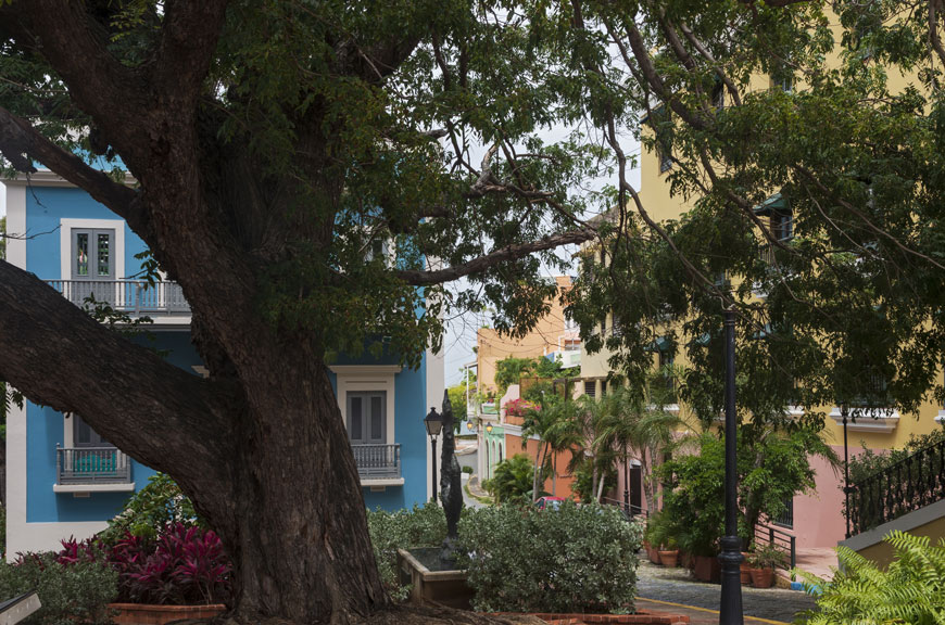 A beautiful old tree in San Juan shades a garden near buildings in blue, yellow, and terracotta.