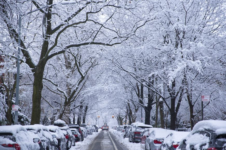 Snow covered trees line a residential street