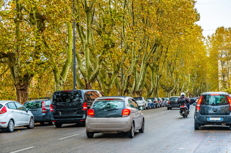 Large yellow-green trees line a busy Italian road